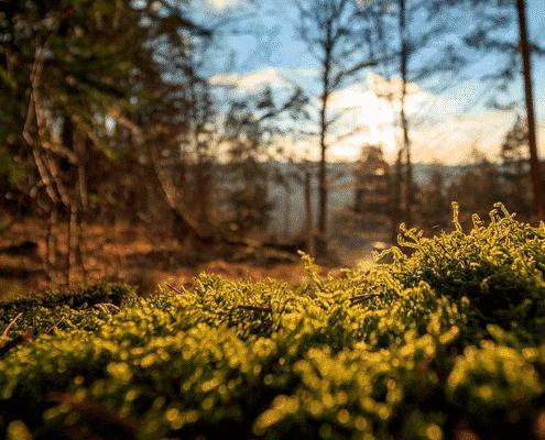 Grøn Hverdag